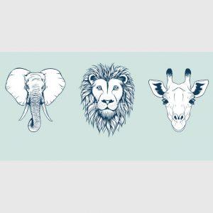 safari-gots